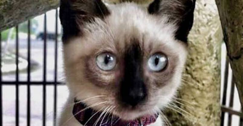 "Law Firm Hires Kitten As ""Cattorney"" After Visitors Complain"