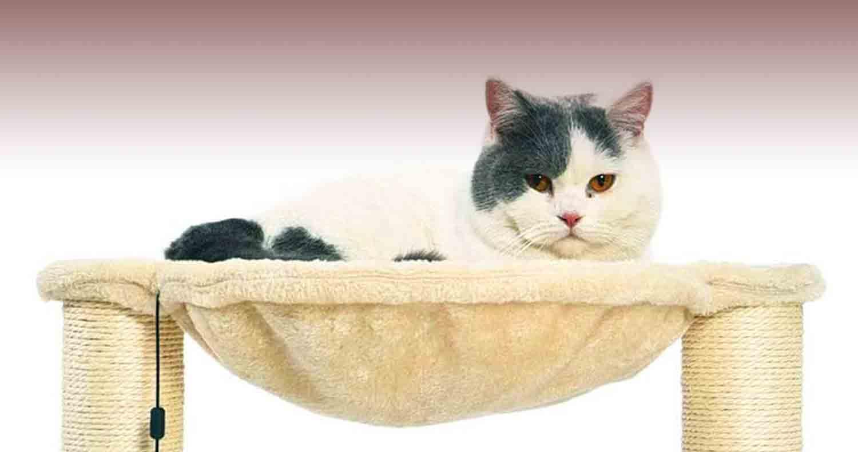 cat-sitting-in-amazon-basics-cat-condo