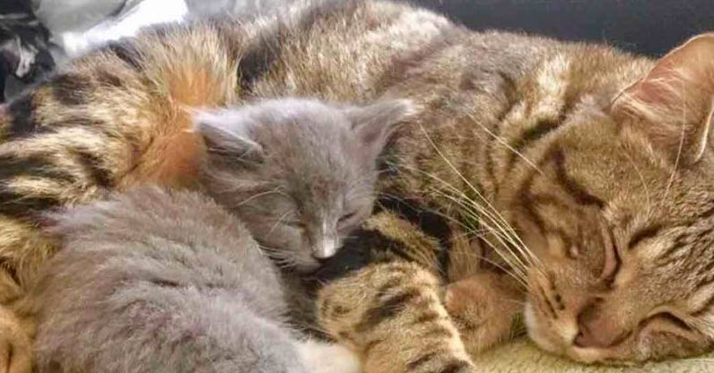 Cat Comforts Orphaned Kitten and Teaches Him to Cuddle Every Day