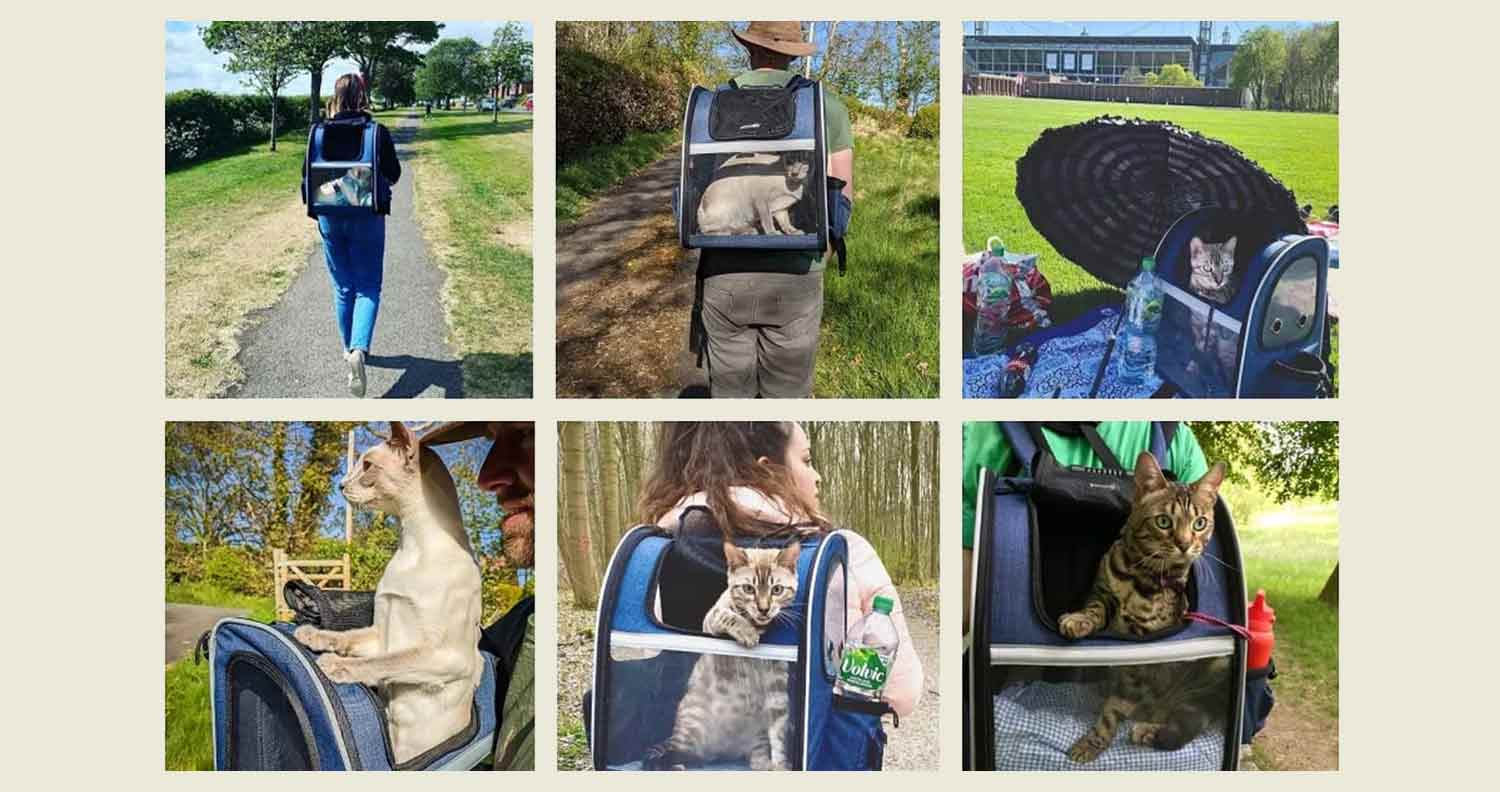 multiple images of cats using their pecute cat carrier backpack