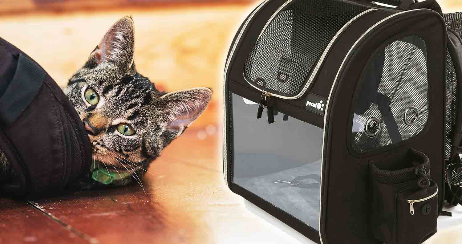 tabby cat lieing next to his pecute cat carrier backpack
